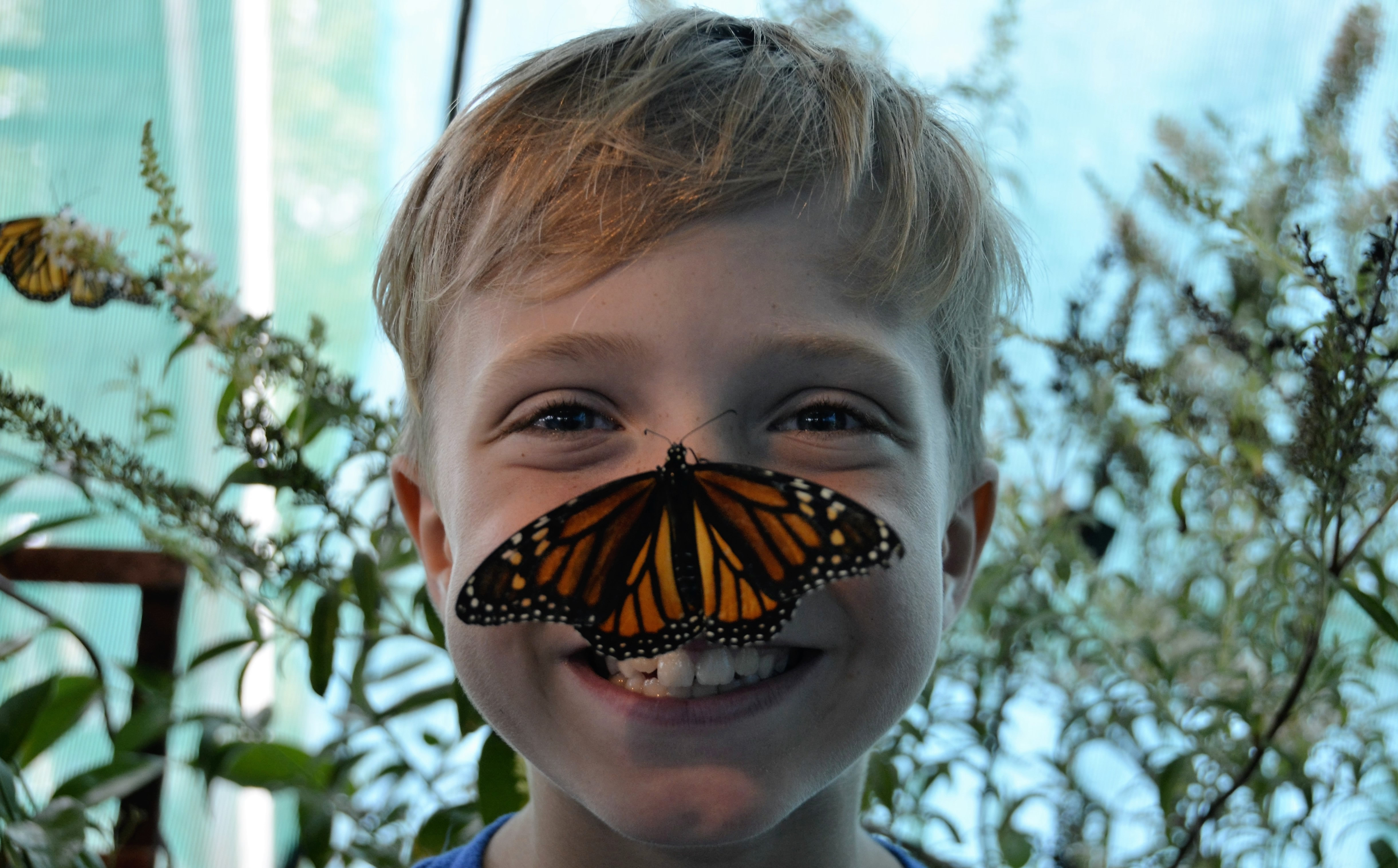 Plant a butterfly garden for flutter and fun take 5 for Favor 03 massage chair